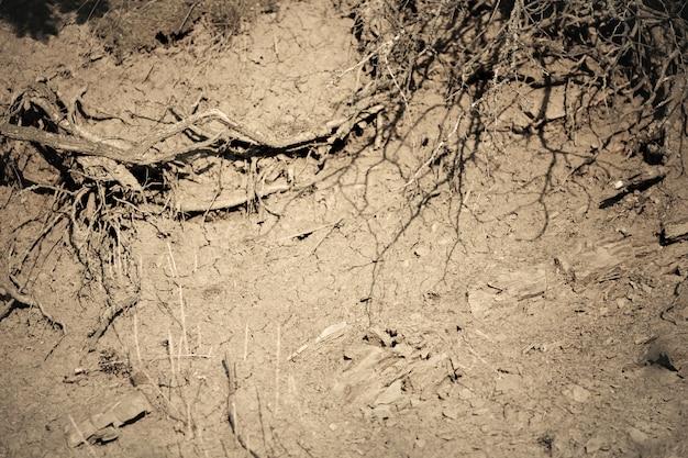 Raízes em um solo