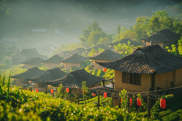 Rak thai village plantação de chá na natureza pela manhã montanhas ao ar livre