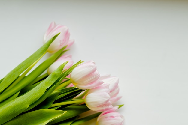 Ramalhete das tulipas cor-de-rosa brancas, macias com as folhas verdes isoladas no fundo branco.