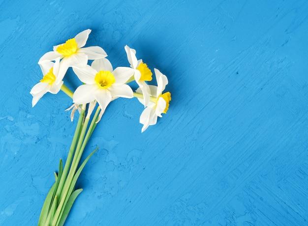 Ramalhete de narcisos amarelos das flores frescas no fundo textured azul. espaço vazio, mock up
