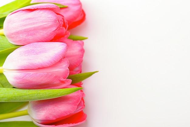 Ramalhete de tulipas cor-de-rosa frescas em um fundo branco, isolado.