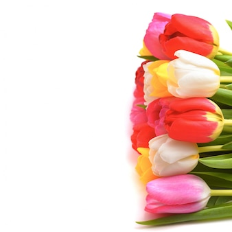 Ramalhete de tulipas frescas, brilhantes, multi-coloridas em um fundo branco, isolado.