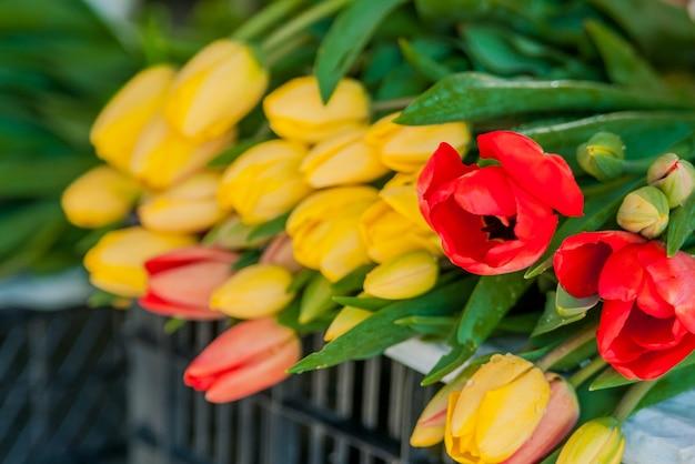 Ramalhete de tulipas na frente da cena da primavera. bouquets de tulipas à venda