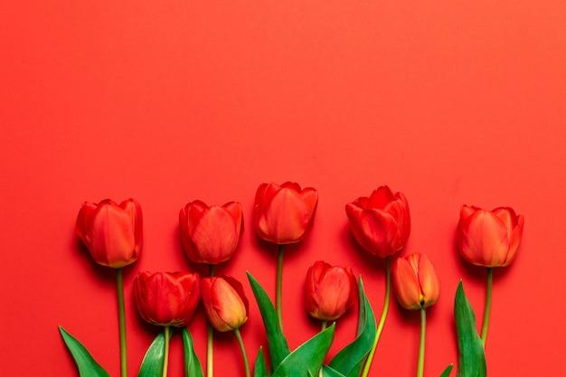Ramalhete vermelho da tulipa no fundo vermelho com espaço da cópia.