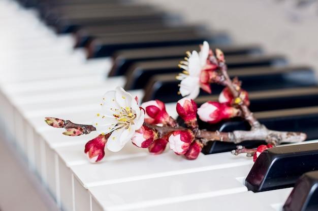 Ramifique com flores de damasco nas teclas do piano. música romântica_