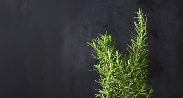 Raminho de alecrim com folhas verdes em fundo preto, tempero aromático para carnes e sopas, copie o espaço