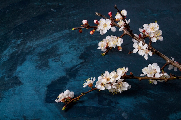 Raminho de flores de cerejeira em uma superfície azul escura