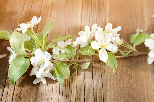 Raminho de flores de maçã