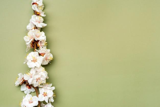 Raminhos de damasco com flores isoladas