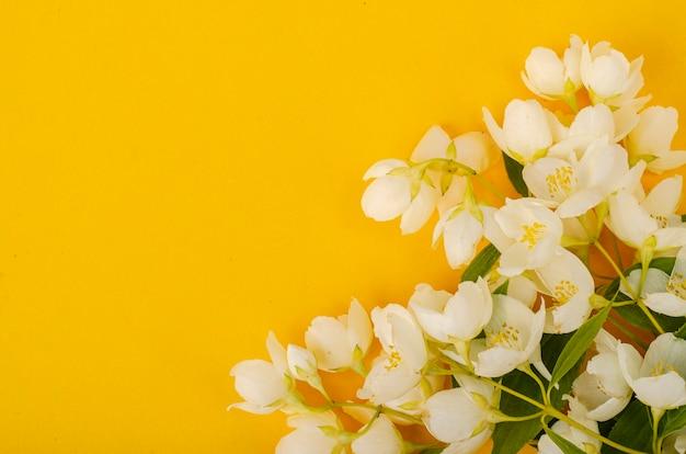 Raminhos de filadelfo com flores brancas