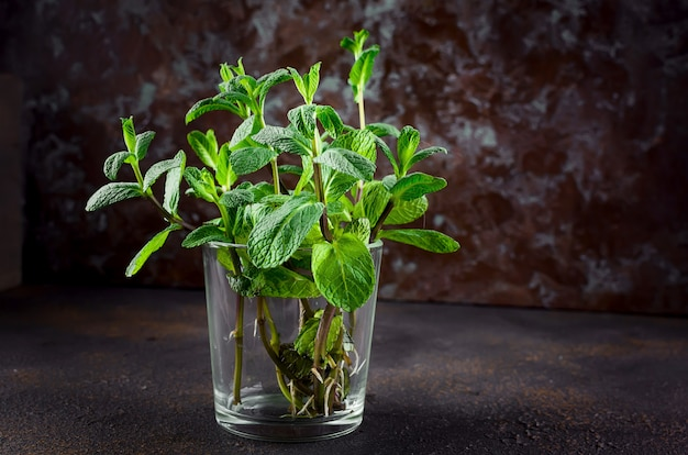 Raminhos de hortelã jovem em um copo em darkon