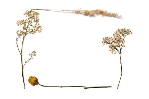 Raminhos secos de gipsófila branca e outras plantas em um fundo branco