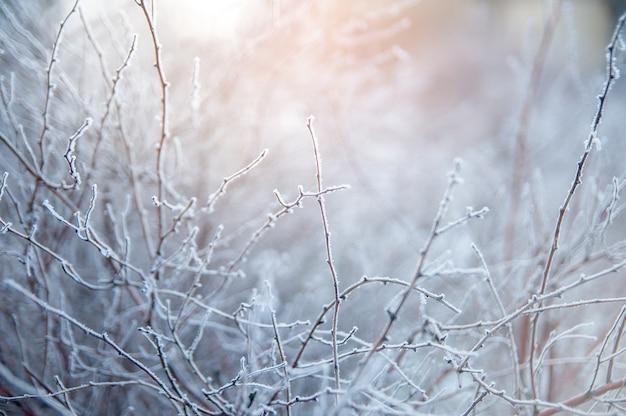 Ramo coberto na geada branca gelado no inverno. primeiras geadas, clima frio