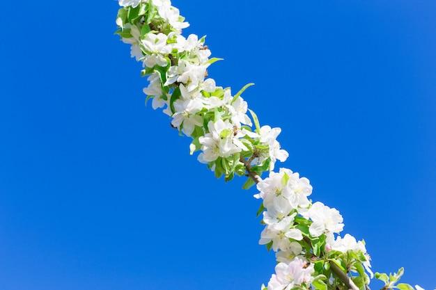 Ramo com flores contra o céu azul