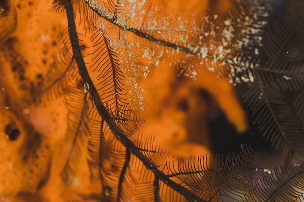 Ramo com geada com um fundo laranja