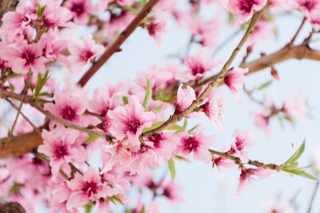 Ramo com lindas flores na árvore