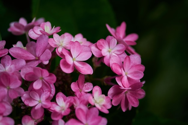 Ramo da flor rosa