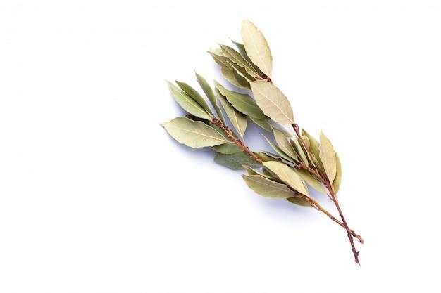 Ramo da folha de louro seco