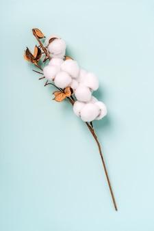 Ramo de algodão em uma vista superior do fundo azul. cor pastel do fundo de algodão