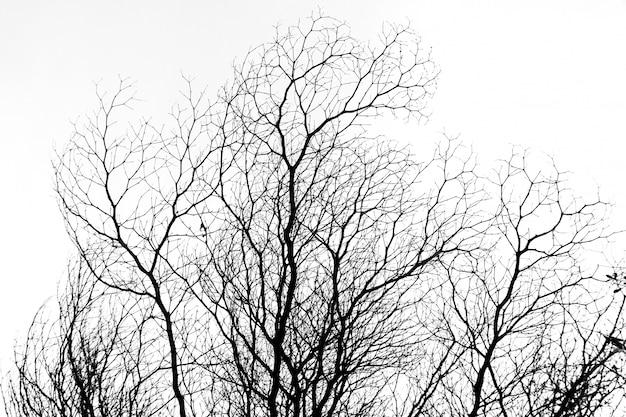 Ramo de árvore b & w contra o céu