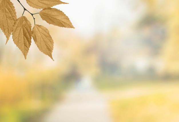 Ramo de árvore de outono pendurado no canto
