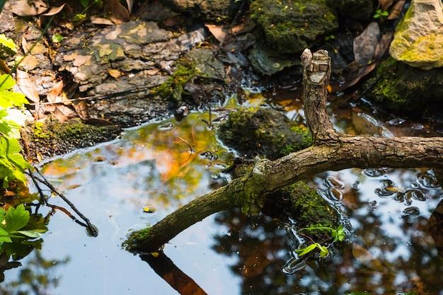 Ramo de árvore na água