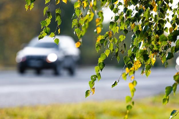 Ramo de bétula com folhas de outono amarelas e verdes em uma rodovia desfocada e carros na superfície
