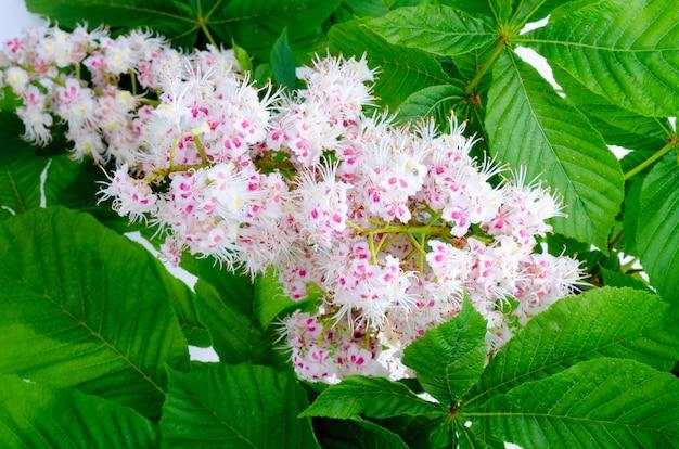Ramo de castanha com folhas e flor
