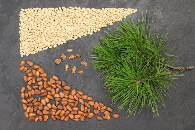 Ramo de cedro. inshell pinhões e grãos de pinhão.