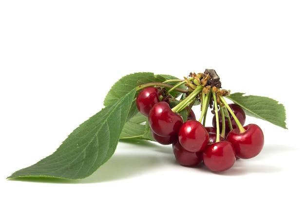 Ramo de cerejas maduras saborosas com folhas em um fundo branco.