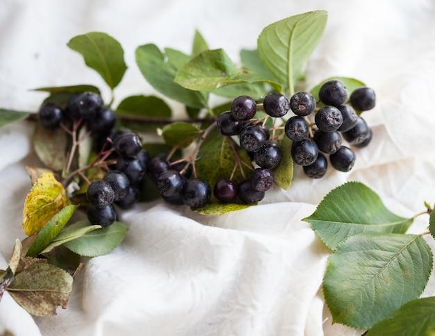 Ramo de chokeberry com folhas em um fundo claro
