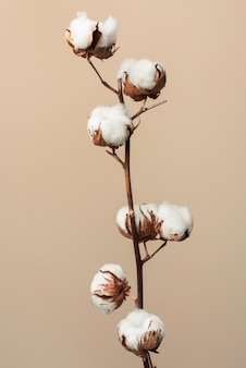 Ramo de flor de algodão fofo seco
