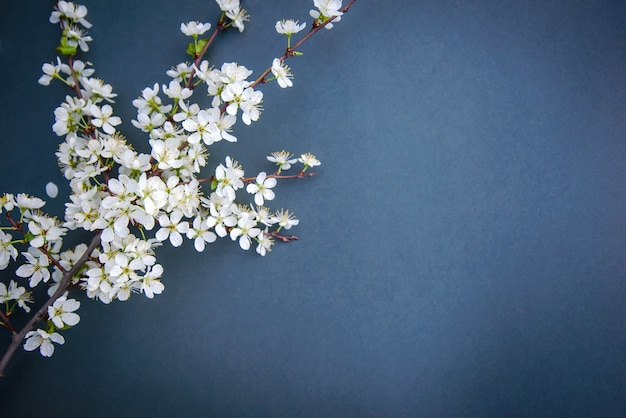 Ramo de flor de ameixa branca em fundo escuro com espaço de cópia