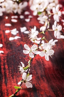 Ramo de flor de cerejeira