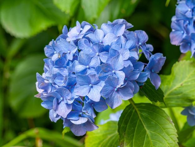 Ramo de flores azuis no arbusto