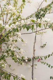 Ramo de flores brancas, folhas na parede de concreto bege neutro.
