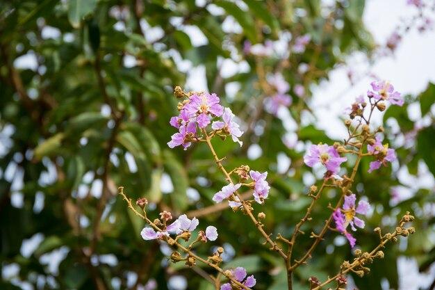 Ramo de flores da rainha close-up.