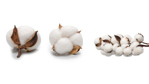 Ramo de flores de algodão isolado no fundo branco. vista do topo.
