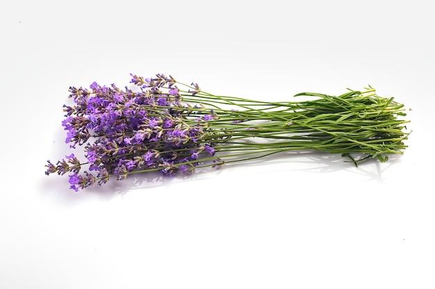 Ramo de flores de lavanda isolado na superfície branca.