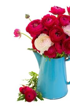 Ramo de flores de ranúnculo rosa em vaso azul isolado no branco
