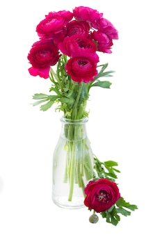 Ramo de flores de ranúnculo rosa frescas em vaso de vidro isolado no branco