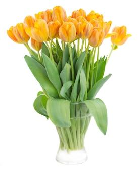Ramo de flores de tulipa laranja isolado no branco