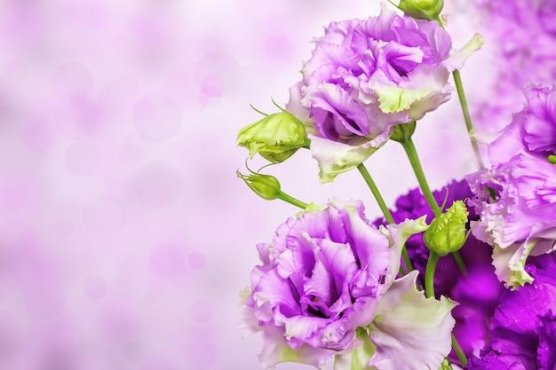 Ramo de flores desabrochando em um fundo desfocado com um bokeh de luzes
