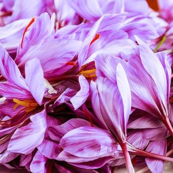 Ramo de flores frescas de açafrão