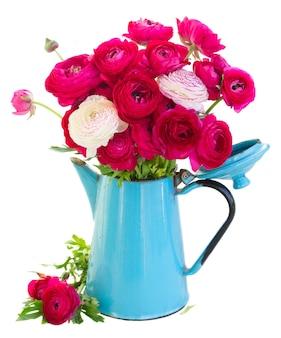 Ramo de flores frescas de ranúnculo rosa em vaso azul isolado no branco