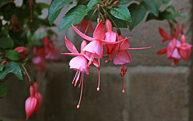 Ramo de flores fúcsia rosa vibrantes deslumbrantes, cusco, peru, américa do sul