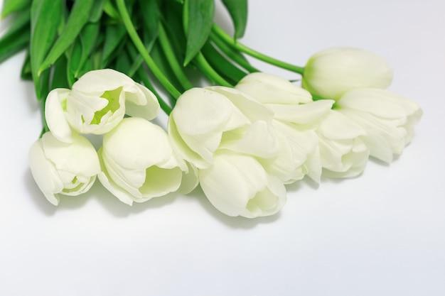 Ramo de flores tulipa branca em fundo branco. tulipa branca desbotada. foco seletivo. vista do topo.