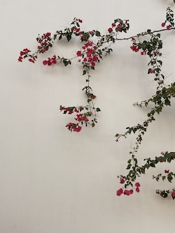 Ramo de flores vermelhas, folhas em parede de concreto bege neutro