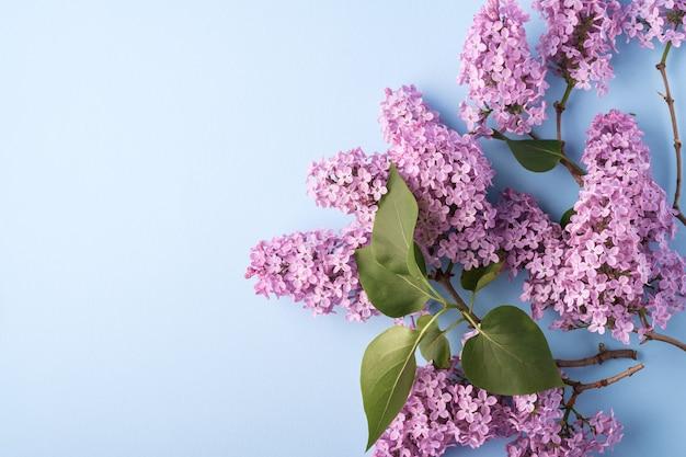 Ramo de florescência lilás com folhas verdes fechar modelo de fundo azul