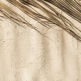 Ramo de folha de folhagem de palmeira seca na parede de concreto. sombras quentes do sol na parede.